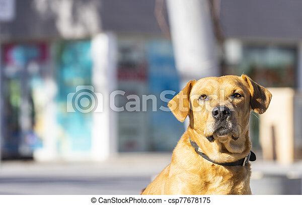 posing in the street - csp77678175