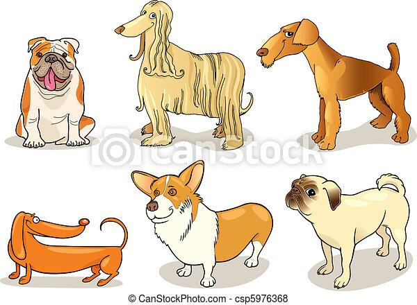 purebred dogs - csp5976368