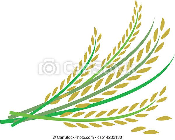 Rice design on white background - csp14232130