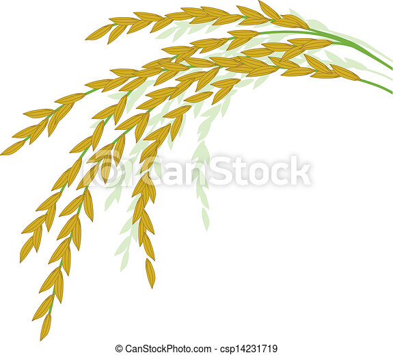 Rice design on white background - csp14231719