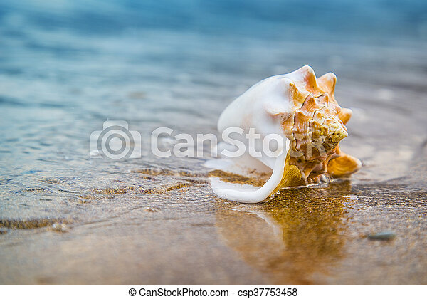 Seashell on sand of the beach in sunlight, background, close up - csp37753458