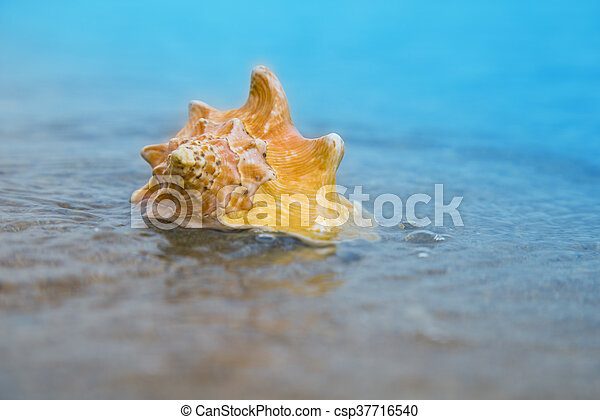 Seashell on sand of the beach in sunlight, background, close up - csp37716540