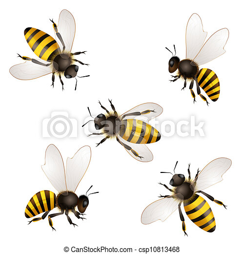 Set of bees isolated on white - csp10813468