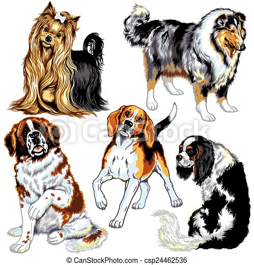 set with dogs - csp24462536