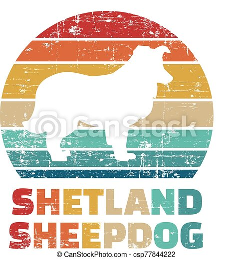 Shetland Sheepdog vintage color - csp77844222