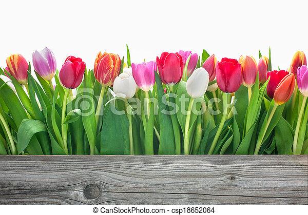 spring tulips flowers - csp18652064