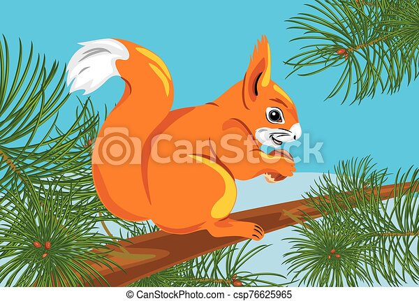Squirrel with a nut on the spruce tree - csp76625965