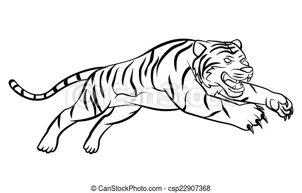 Tiger - csp22907368