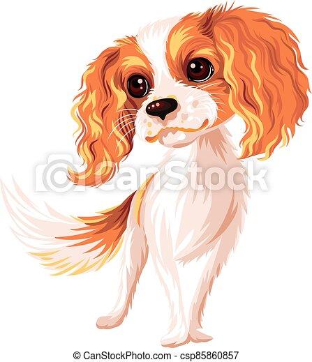 Vector dog Cavalier King Charles Spaniel - csp85860857