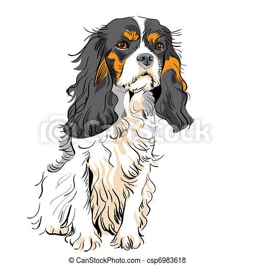 vector dog Cavalier King Charles Spaniel - csp6983618
