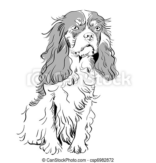 vector purebred dog Cavalier King Charles Spaniel - csp6982872