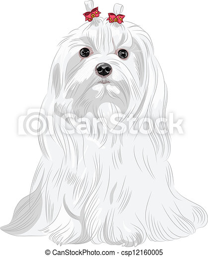 vector serious white dog Maltese breed sitting - csp12160005