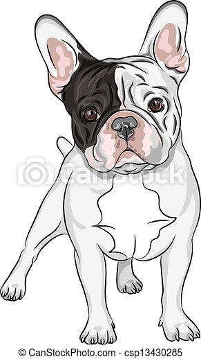 vector sketch domestic dog French Bulldog breed - csp13430285