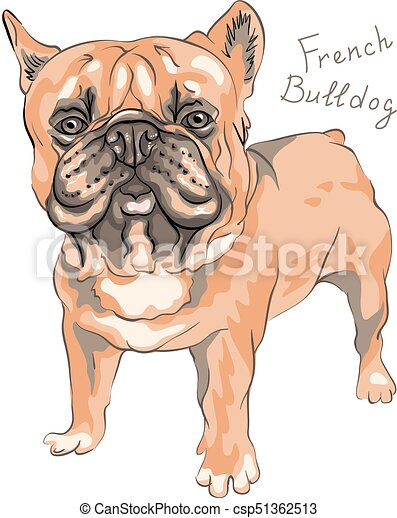 vector sketch domestic dog French Bulldog breed - csp51362513