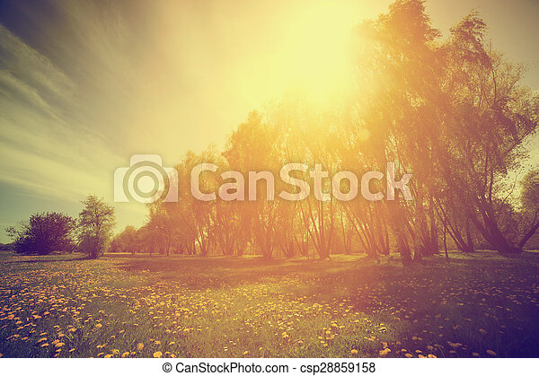 Vintage nature. Spring sunny park, trees and dandelions - csp28859158