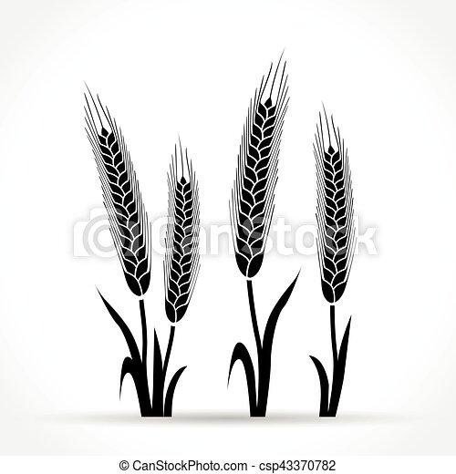 wheat design on white background - csp43370782