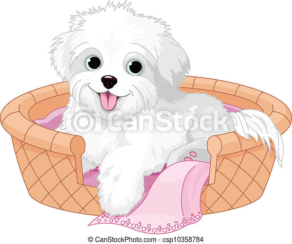 White fluffy dog - csp10358784