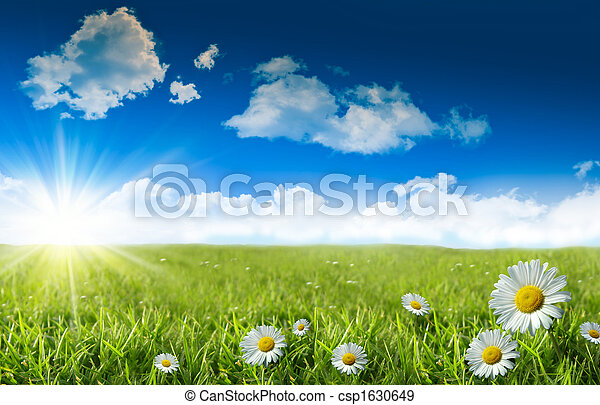 Wild daisies in the grass with a blue sky - csp1630649